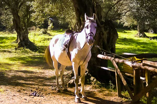 Horse riding corfu